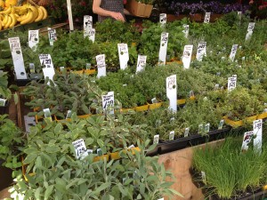 A Variety of Herbs at My Local Store