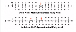 Chemical structure of poly and mono-unsaturated fatty acids
