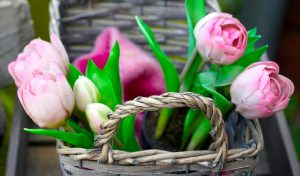 pink tulips and pink blanket in basket