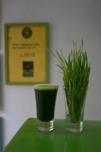 a shot glass with wheatgrass juice beside a glass with wheat microgreens
