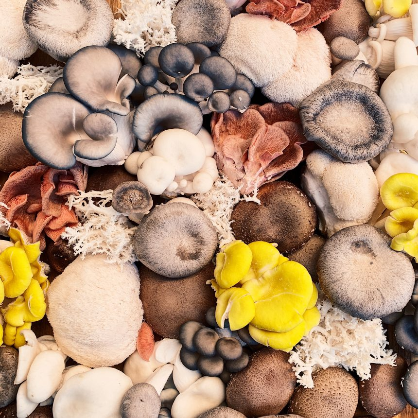 Are Mushrooms a Vegetable?…and Other Facts About Mushrooms